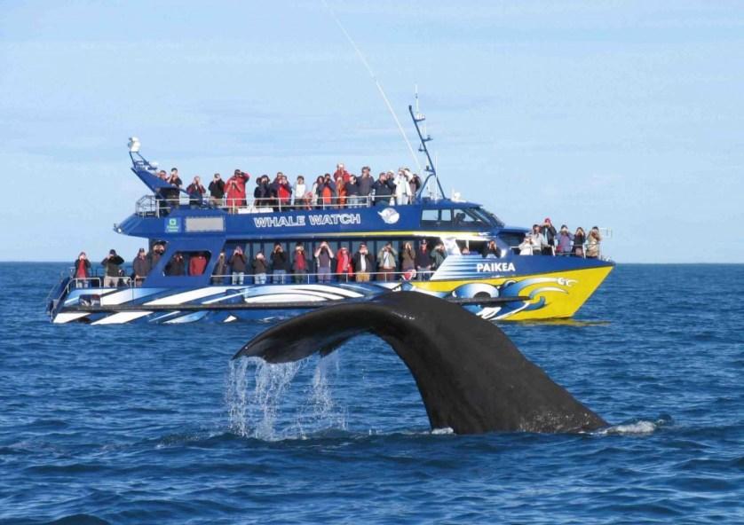 Spot Whales In Kaikoura