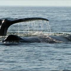 Best Whale Watching Spots In Western USA