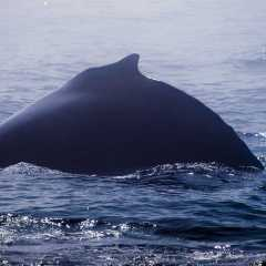 Best Whale Watching Destinations To Consider In North America