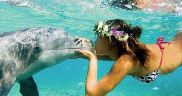 dolphins in honolulu