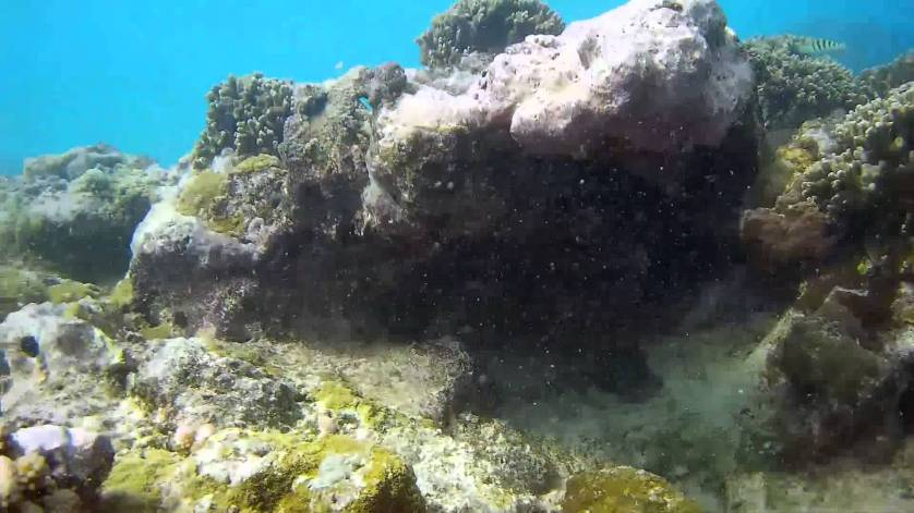 Snorkeling At Trou aux Biches