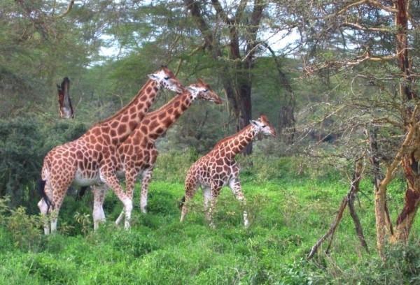 Wildlife Watching And Birdwatching In Comoe National Park