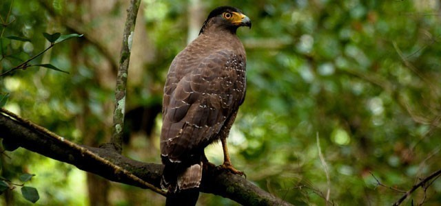 Birding In Sinharaja Forest Reserve, Sri Lanka
