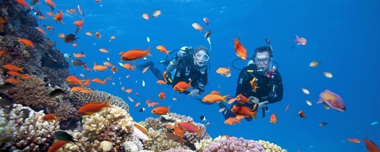Dive Sites In Cebu, Philippines