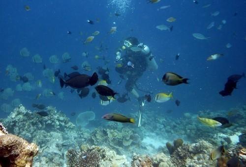 Diving in Mactan Island, Cebu