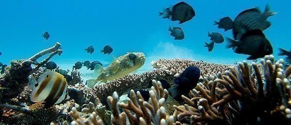 Diving in Malapascua Island, Cebu
