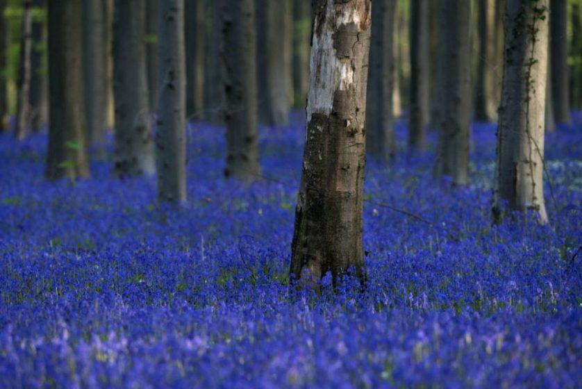 The Blue Forest, Belgium