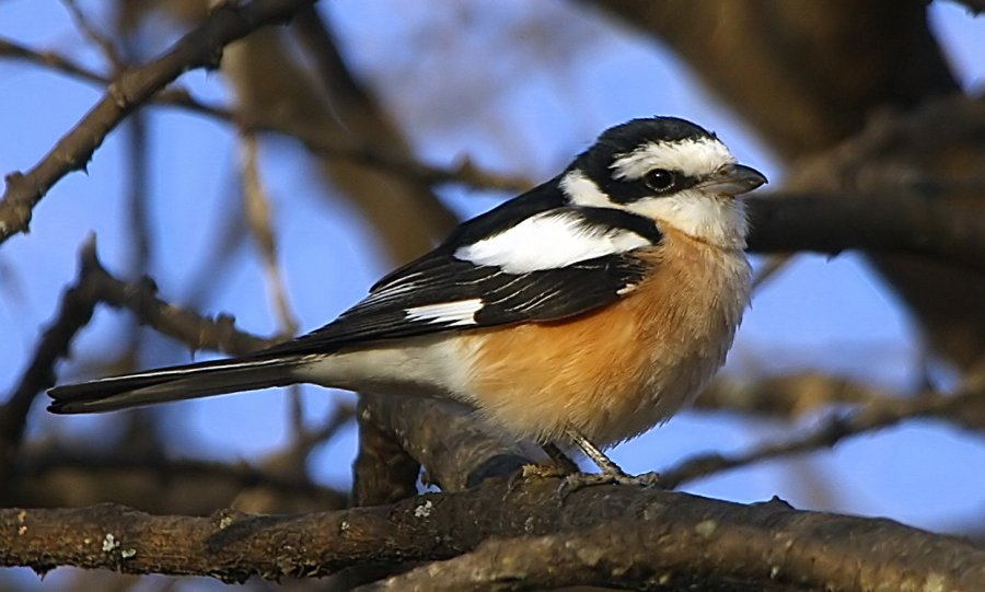 birding-in-ethiopia