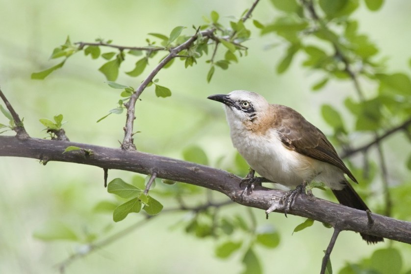 birding-in-namibia