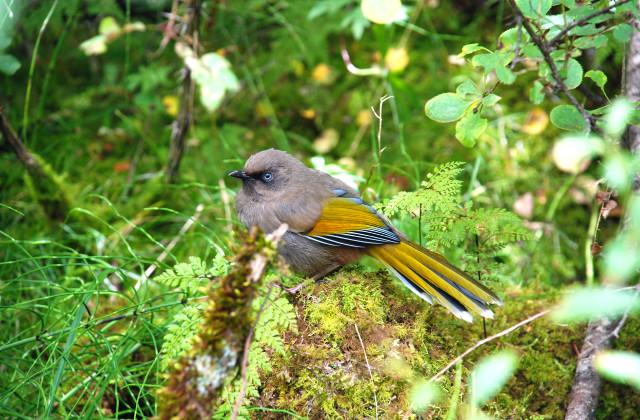 Bird Species In Jiuzhai Valley National Park