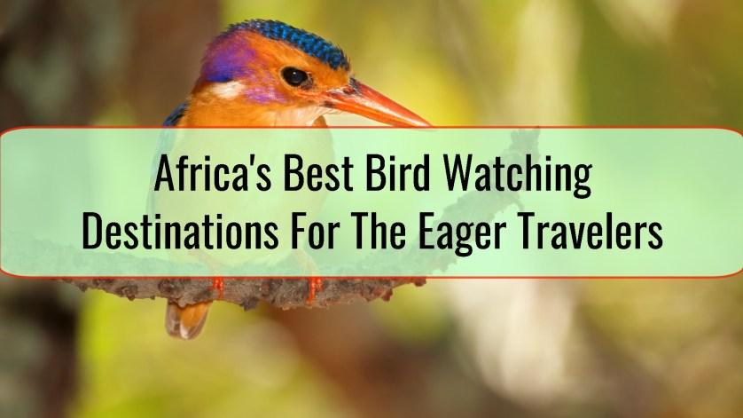 africa bird watching