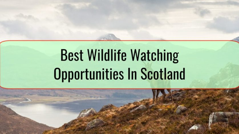 Best Wildlife Watching Opportunities In Scotland