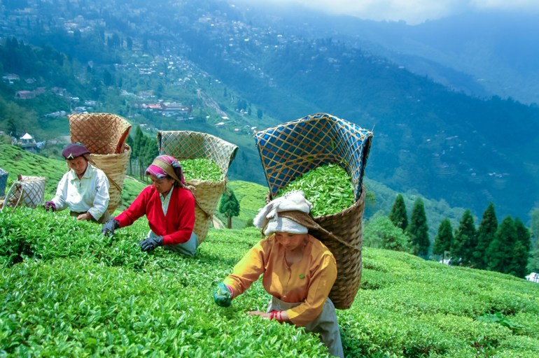 Darjeeling is open to vacationers from July 1 2020