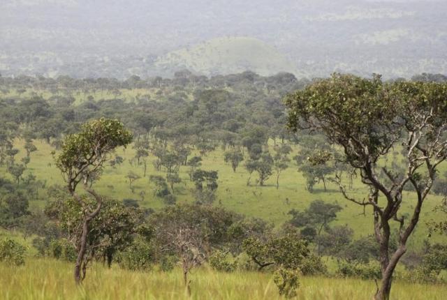 Bururi national reserve
