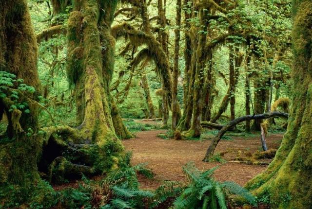 Kigwena Natural Forest