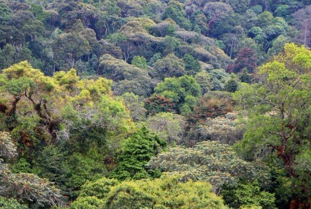 The Kibira national park