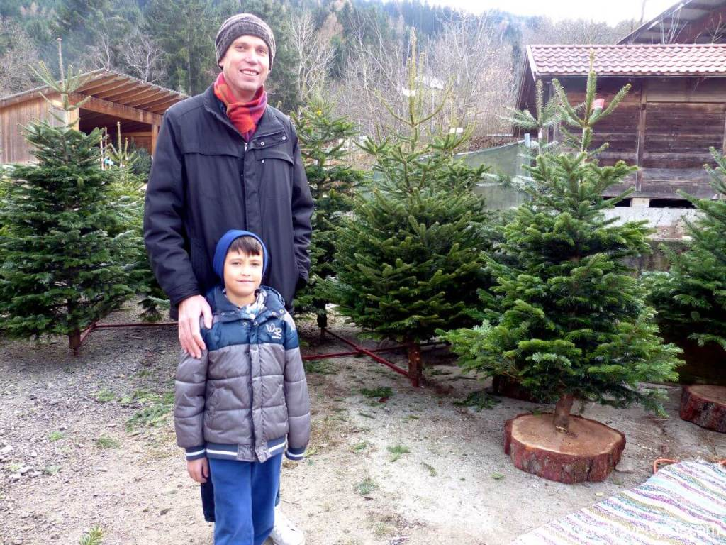 An Austrian Christmas tree for the choosing.
