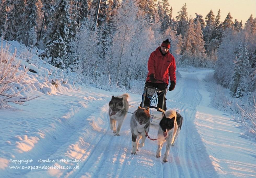 Dog sledging in Finland
