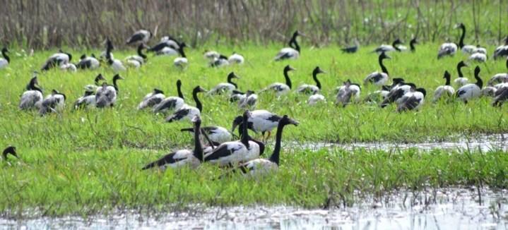 Northern Territory's birdlife