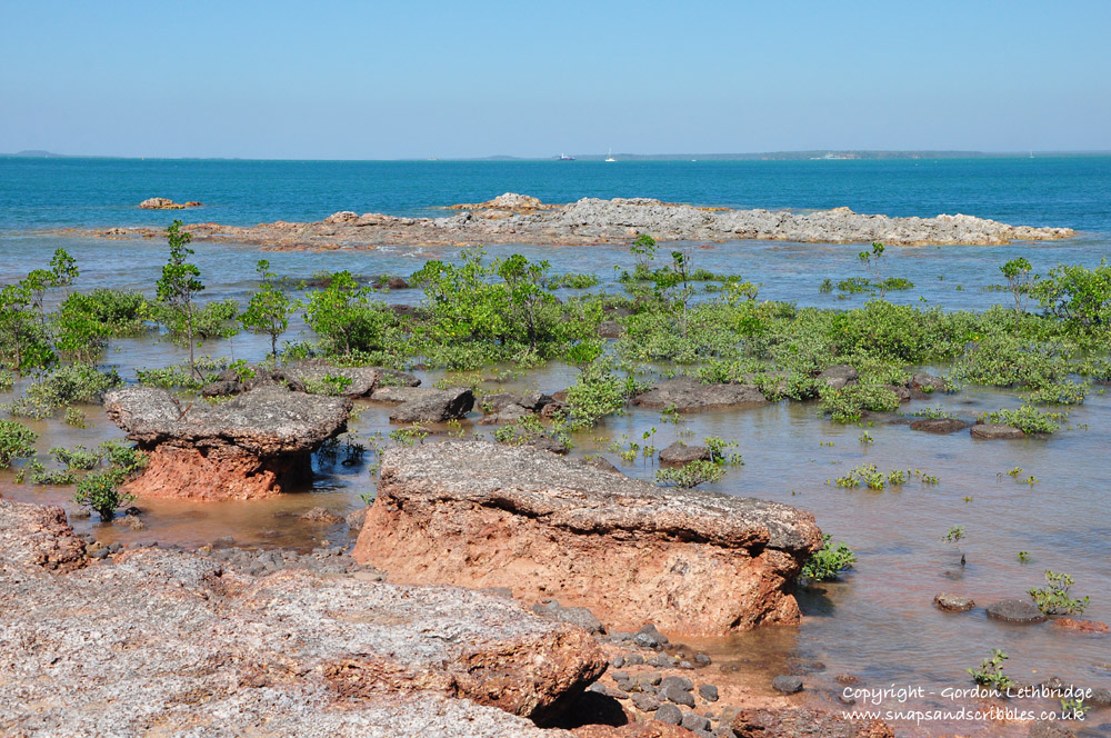 Mangroves and exposed reef at East Point Reserve