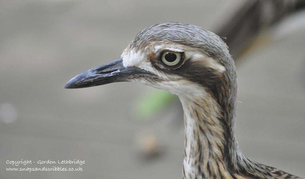 outback birdlife 7