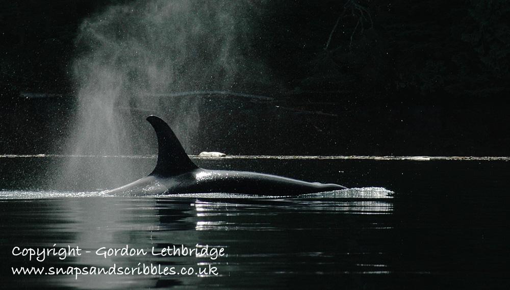 orca 05