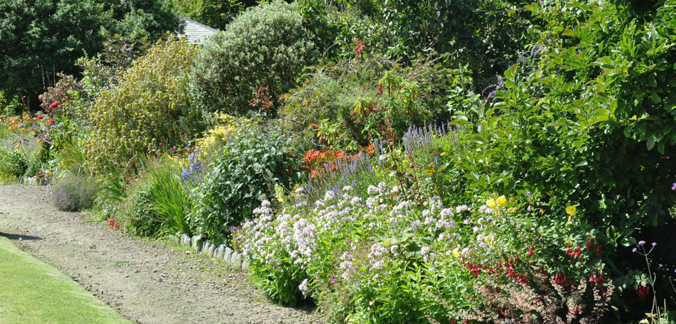 The borders at Clovelly Court Gardens