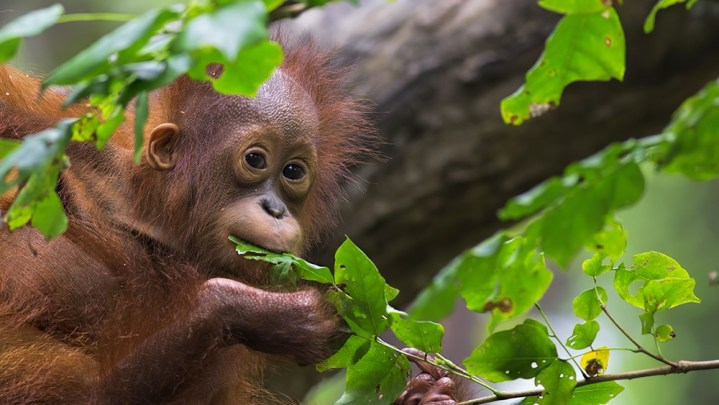 10 Wildlife Experiences: Up close and personal