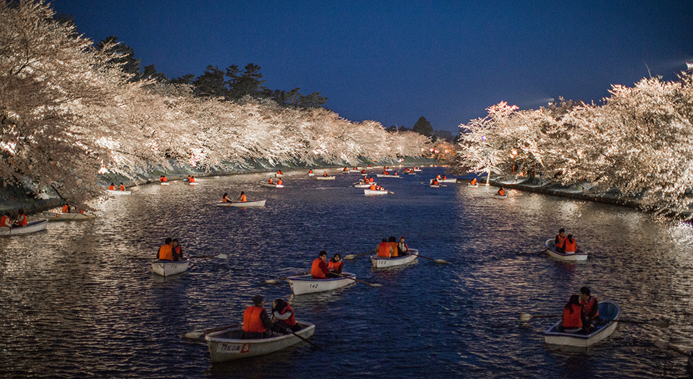Boats on a lake with illuminated cherry trees