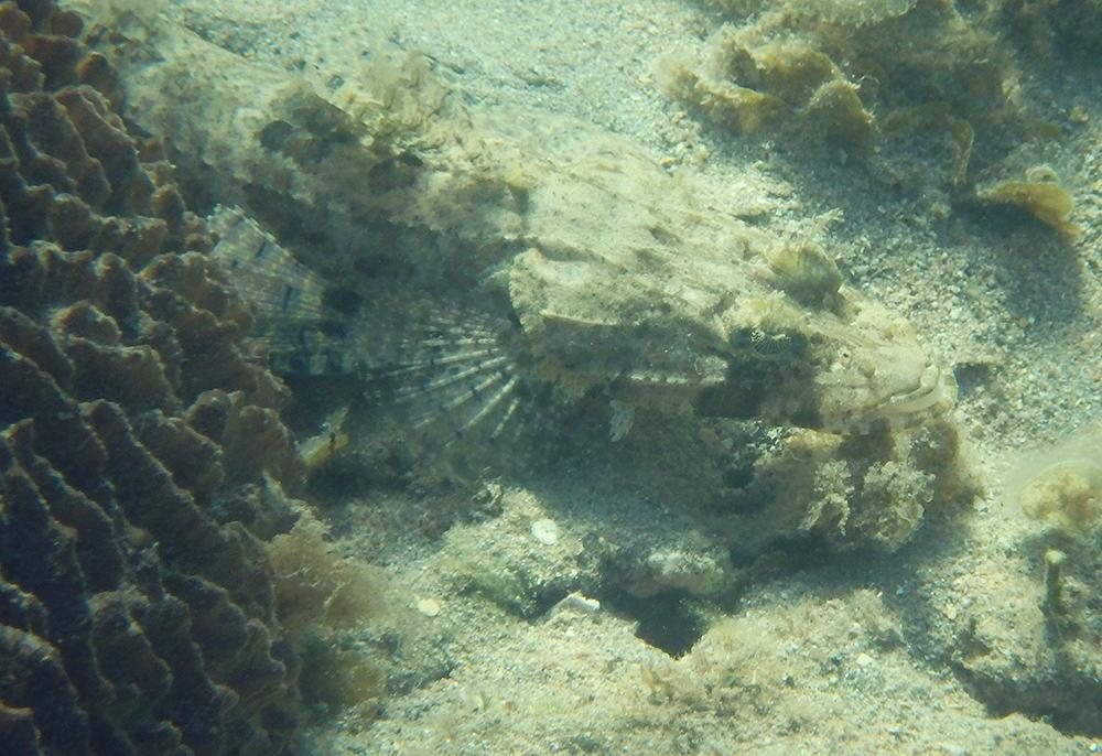 snorkelling Ningaloo
