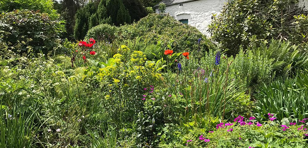 Pembrokeshire Garden 002