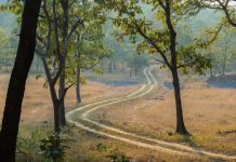 A Walk In The Park - Satpura