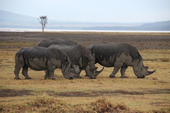 safari sites in Africa