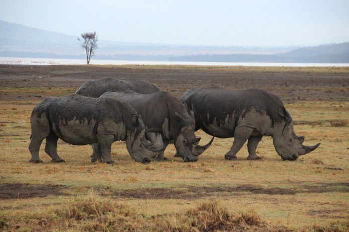 Top Tourist Attractions in Zimbabwe