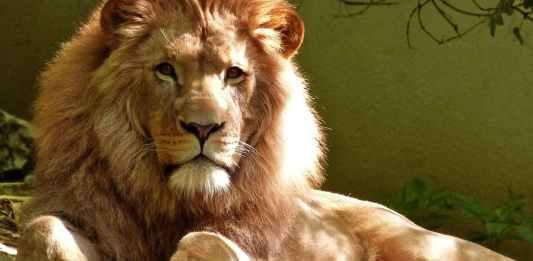 zoos in nigeria