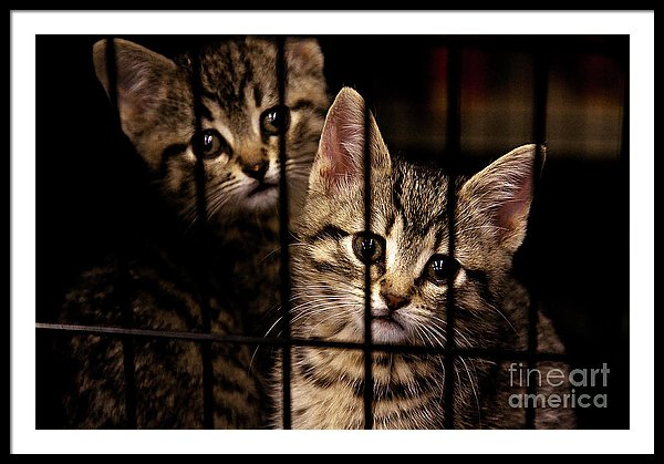 Take me home - Kittens behind bars framed art print by Tatiana Travelways
