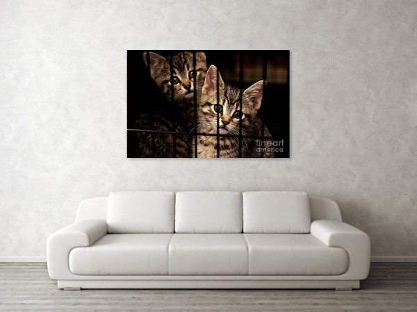 Kittens behind bars wall art print by Tatiana Travelways