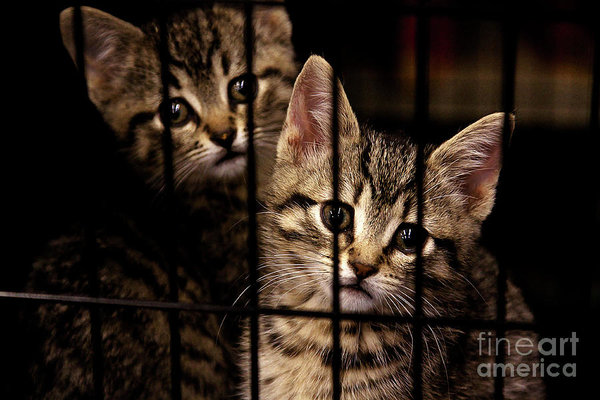 Take me home - kittens behind bars begging for addoption - by Tatiana Travelways