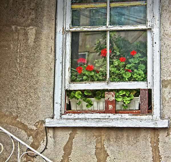 Open window with geraniums
