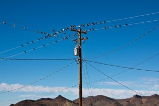 Pigeons on power lines
