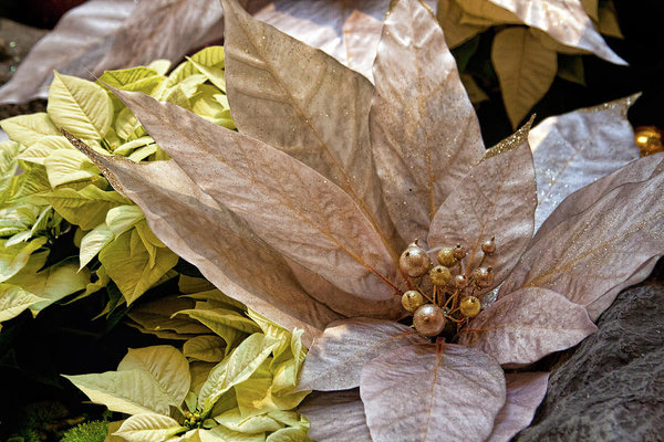 Poinsettia Winter Holidays Decoration