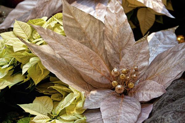 Poinsettia Winter Holidays Decoration