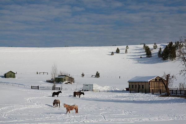 Winter Farm in Montana
