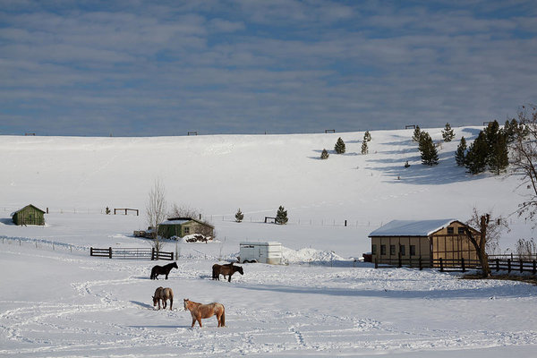 Winter Farm in Montana