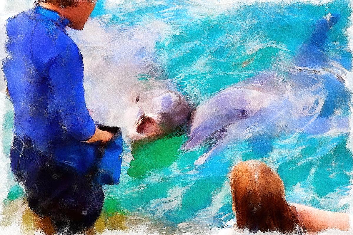 Feeding dolphins watercolor of liquid