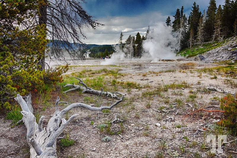 Hot springs and geysers at the Uper Basin in Yellowstone