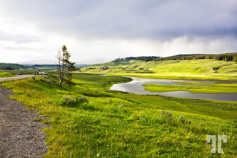 Beautiful green color of the field in the light before the storm in Yellowstone National Park