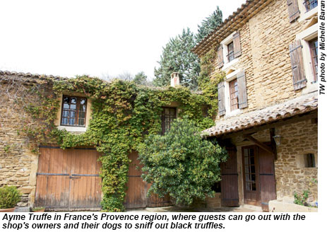 Ayme Truffe in the Provence region.