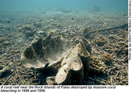 A coral reef near the Rock Islands of Palau destroyed by massive coral bleaching in 1998 and 1999.