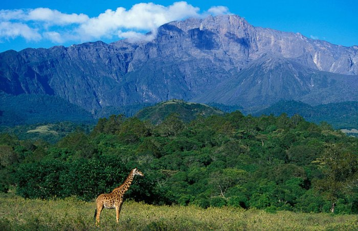 Arusha National Park, safari holidays , tanzania tourism, cheap flights to tanzania, direct flights to tanzania, tanzania safari, things to do in tanzania, tanzania holiday packages, tanzania safari packages,
